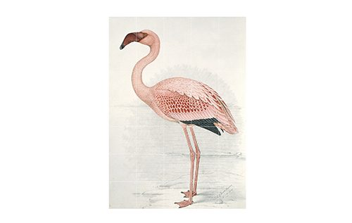 DR flamingo